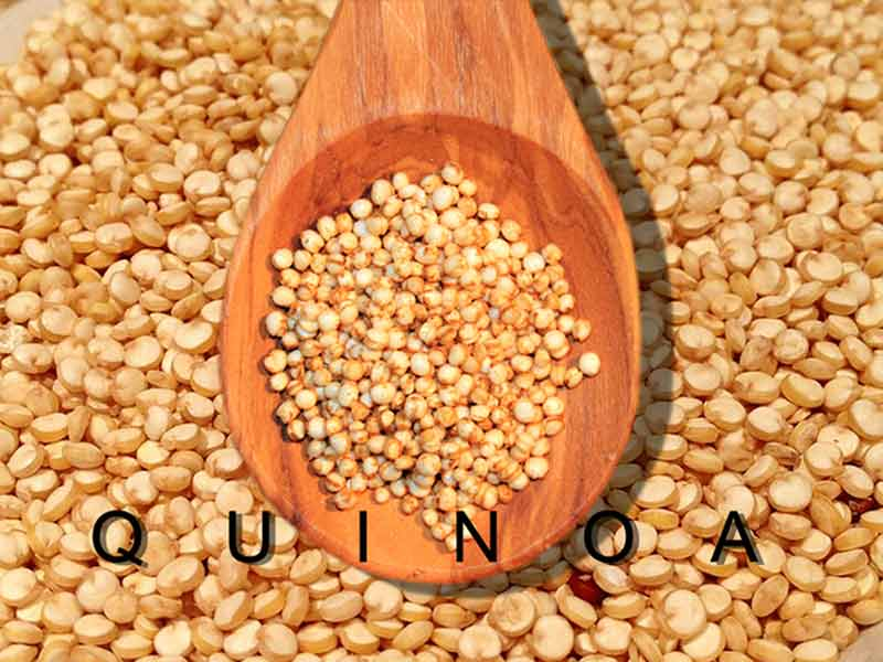 Quinoa uses and benefits in Hindi