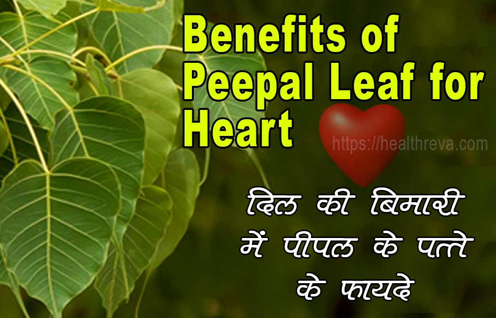 Benefits of Peepal Leaf for Heart in Hindi
