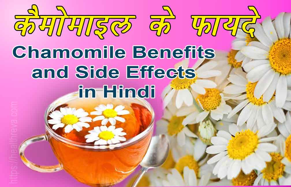 Chamomile Benefits and Side Effects in Hindi