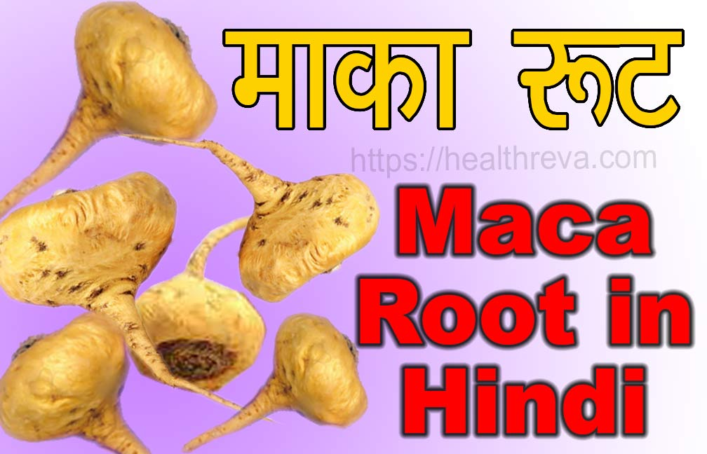 Maca Root in Hindi