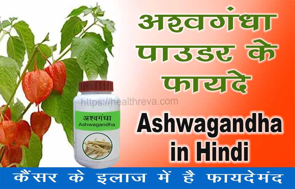 अश्वगंधा पाउडर के फायदे इन हिंदी | Ashwagandha in Hindi