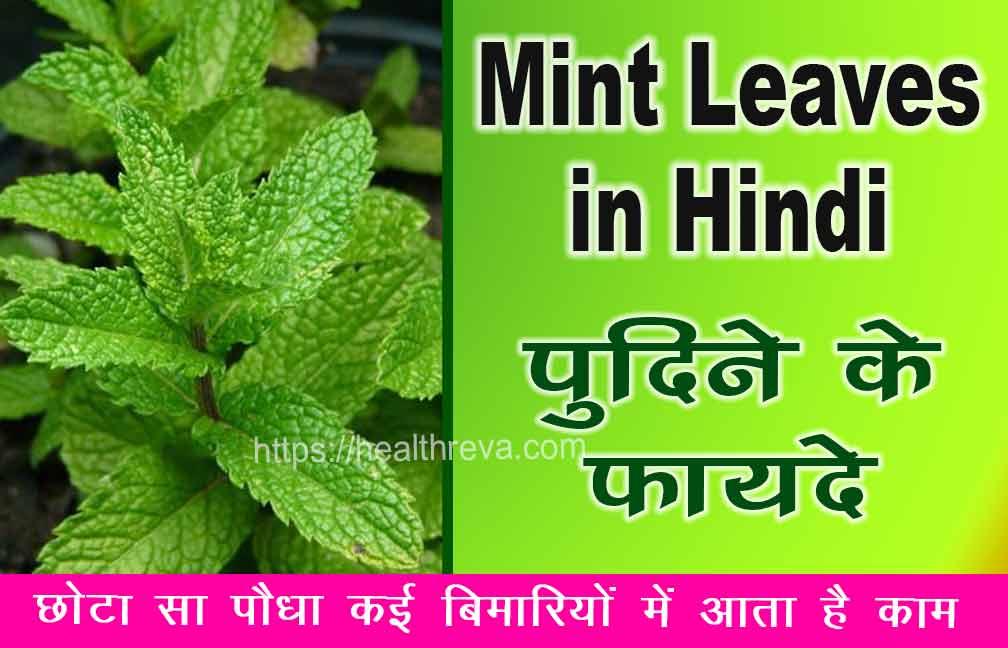 Mint Leaves in Hindi -पुदीने के फायदे