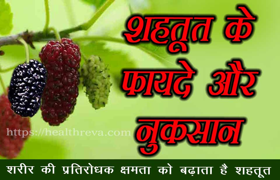 Mulberry Benefits and Side Effects in Hindi